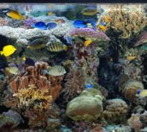 Das Korallenriffaquarium