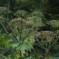 400 Neophyten in Südtirol