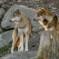 Das Wolf-Urteil