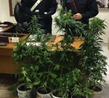 Vinschger Marihuana
