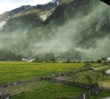 Die Blütenstaub-Wolke