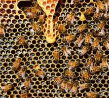 Zuschüsse für Bio-Bienen