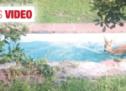 Reh im Schwimmbecken
