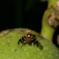 Der Fruchtfliegen-Forscher