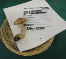 Seltene Pilze