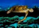 Stötters Schildkröte