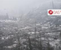 Der zerstörte Wald