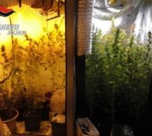 Marihuana im Keller