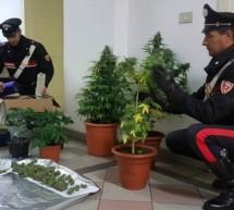 Marihuana in Brixen
