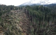 Die Auswirkungen der Waldschäden