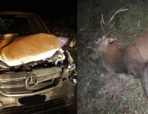 Auto vs. Hirsch