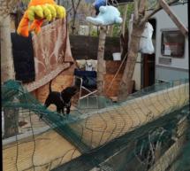 Zwei Hunde konfisziert