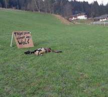 Das totgebissene Schaf