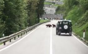 Bären auf der Straße