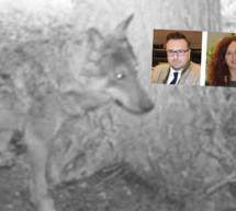 """""""Wolf nicht dringlich"""""""
