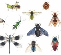 Insekten zeichnen