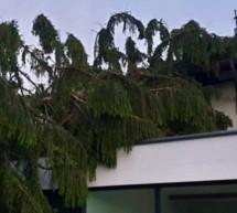 Baum stürzt auf Haus