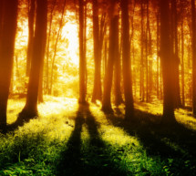 Was wissen Bäume?