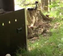 Das gerettete Bären-Baby