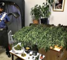 Der Marihuana-Gärtner