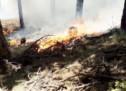 Waldbrand im Vinschgau