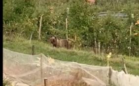 Der Bär im Dorf