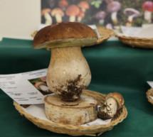 Die Pilze in Südtirol