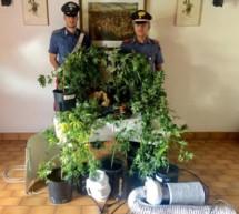 Die Marihuana-Plantage