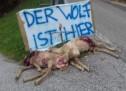 """""""Der Wolf ist hier"""""""