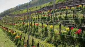 Mehr Artenvielfalt, bessere Ernten