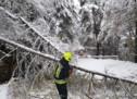 Das Schnee-Chaos