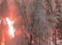 Baum stürzt auf Stromleitung
