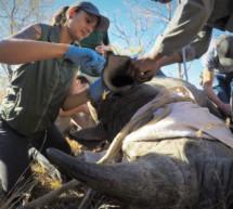Die Nashornschützerin