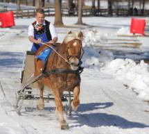 Die Haflinger-Rennen