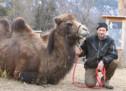 Kamele in Tisens