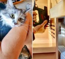 Gerettete Katze