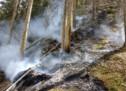 Brand im Wald