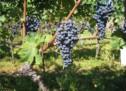 Hilfen für Weinbauern