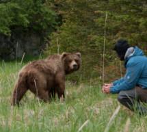 """Bären sind sehr friedfertig"""