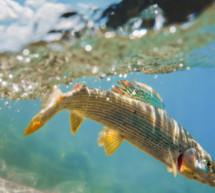 Tag der Fische