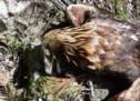 Aktenzeichen Adler