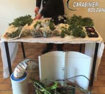 Cannabis-Blüten im Rucksack