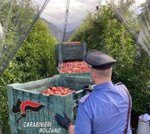 Carabinieri auf der Wiese
