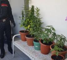 Corona & Cannabis