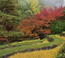 Die schönsten Fotos der Gärten