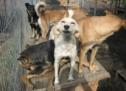 Missglückte Hunde-Adoption
