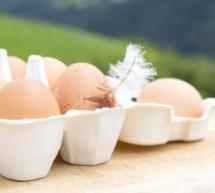 """""""Nehmt unsere Eier"""""""