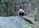 """""""Der Bär ist noch da"""""""