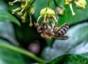 Paradies für Bienen