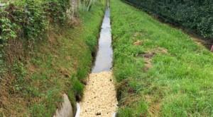 Verunreinigtes Grundwasser?